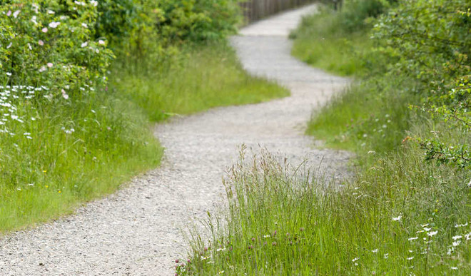 Snehi's Poem On 'Search For The Path'