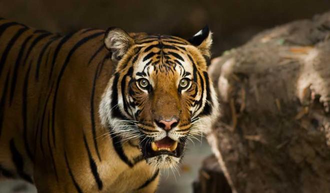 Bhanushri's Poem On 'Majestic Creature'