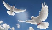Sadaf's Poem on 'Path of Peace'