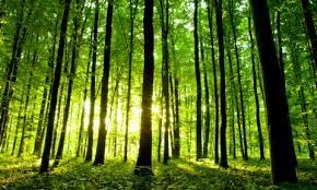 Ananya's Poem 'Oh Beautiful Earth'