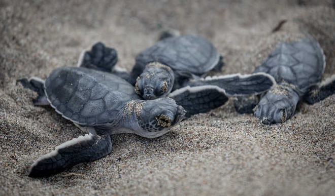 How Plastic Is Killing Sea Turtles
