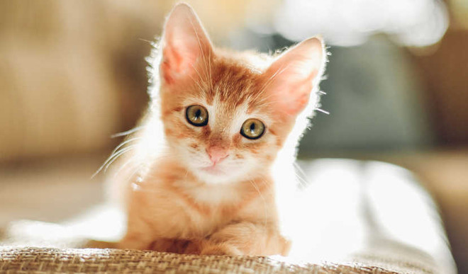 Tips To Welcome Your New Kitten In Family