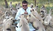 The Monkey Man Of Ahmedabad