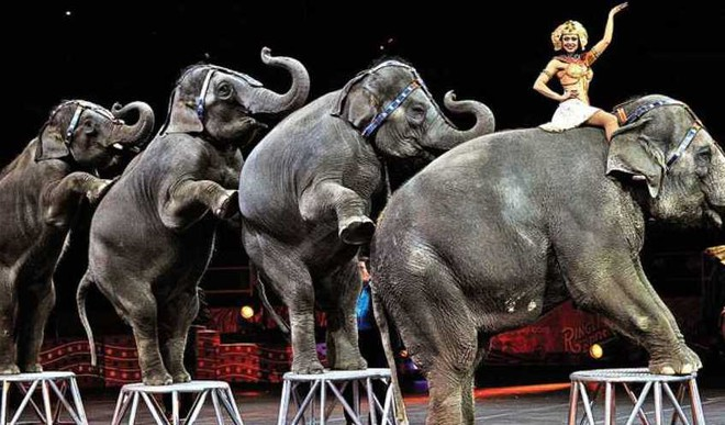 Government Proposes Ban On Animals In Circuses