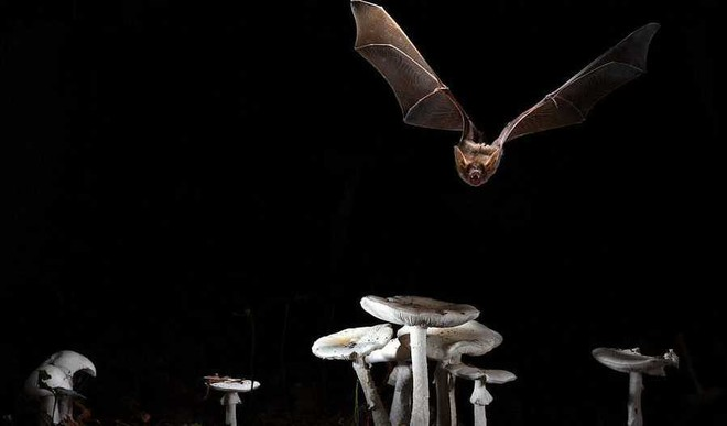 Why Bats Live For A Long Time