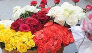 How To Choose The Perfect Rose