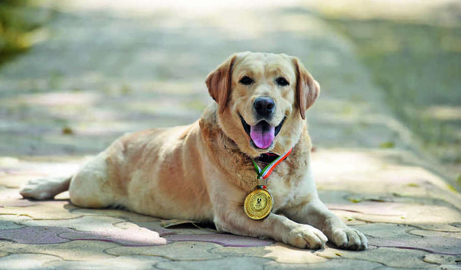 Pawsome! The Dog Squad of Delhi Metro
