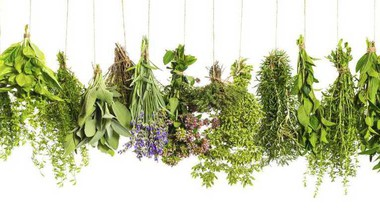 6 Herbs To Include In Your Daily Diet