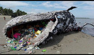 Whale Found Dead With 29 Kg Of Plastic In Its Stomach!