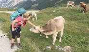 Why Cows Deserve An Award