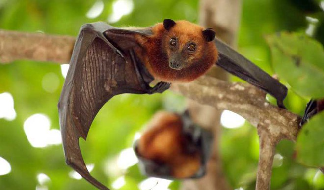 What Is Nipah Virus And How To Prevent It