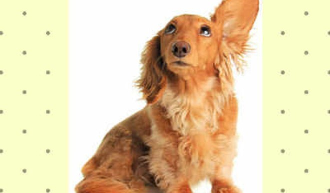 Manage Your Pooch's Hair Shedding