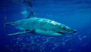 Aarush: Let's Pledge To Save Sharks