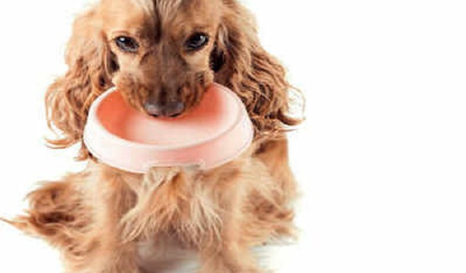 Control Your Pet's Food Cravings