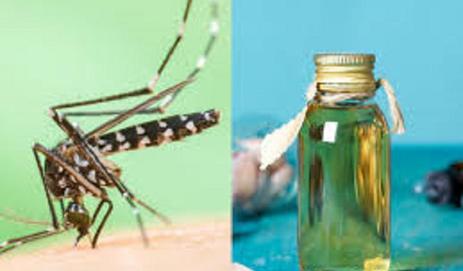 Try These DIY Mosquito Repellents