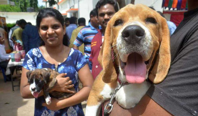 Growing Cruelty: Court Announces Equal Rights For Animals