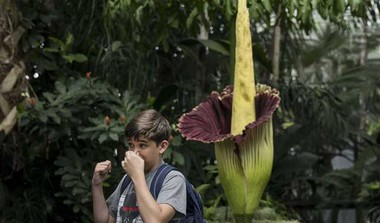 What Is The Stinky 'Corpse Flower'