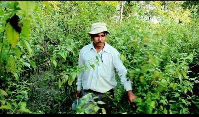 This Man Planted A Tree Every Day & Created A 1400-Acre Forest