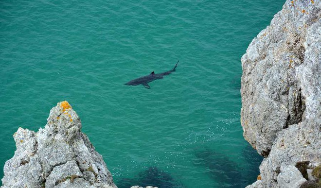 The Mystery About Basking Sharks Unveiled!