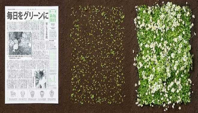 Tejashree: Plant Your Newspaper And It Will Blossom!