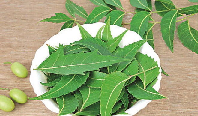 Use Neem For Skin Nutrition