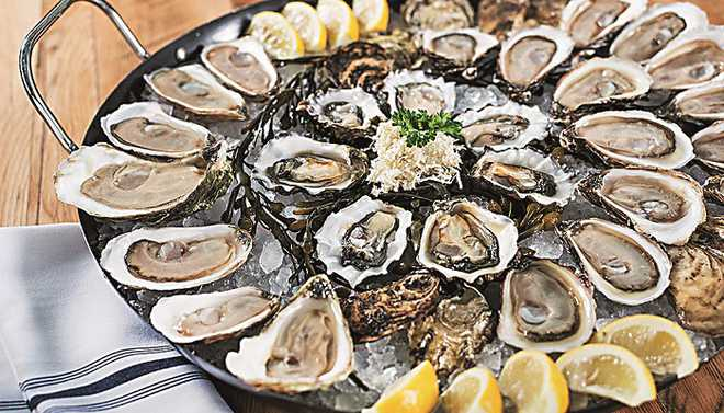 Oysters May Soon Help Fight Pollution