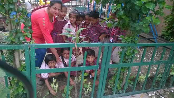 Students Take Part In Tree Plantation