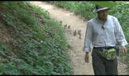 Korean Man Raises 21 Ducklings As His Own Children