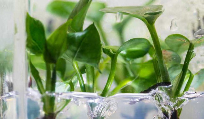 This Plant Removes Cancer-Causing Pollutants From Air