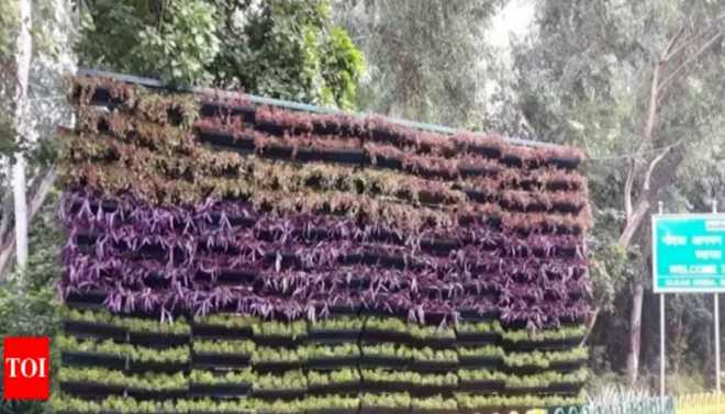Roadside Hedges Help Combat Pollution