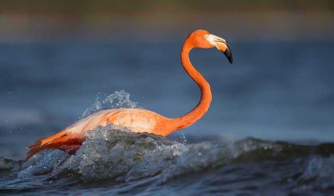 How Bird Beaks Evolved Over Time
