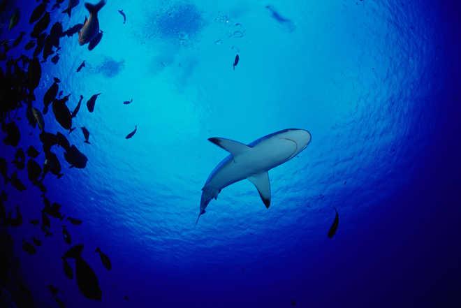 Loud Oceans Pose Threat To Marine Life