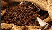Half Of Coffee Species May Soon Be Extinct