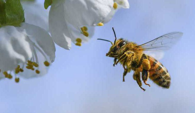 Why Bee Is The Most Important Living Being