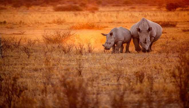Botswana: Humanity's Birthplace