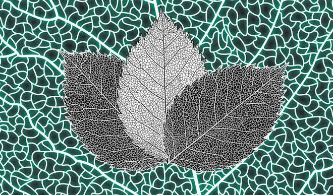 This 'Artificial Leaf' Sucks In CO2 And Makes Fuel
