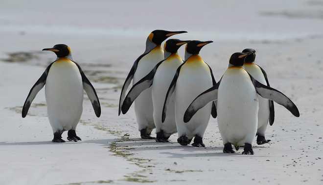 Global Warming Is Melting Emperor Penguin Colonies