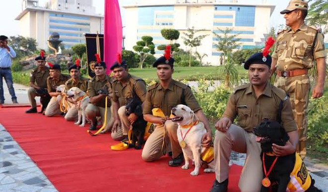 'Born As A Dog, Retired As A Soldier'