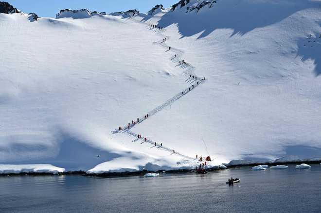 In Antarctica, tourists swim among penguins