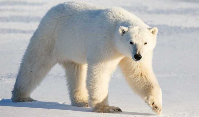 Learning With Times NIE: What are Polar Bears?