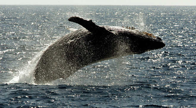 Microplastics Found In Dolphin, Whales