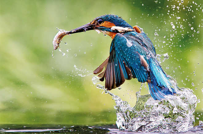 National Geographic Contest: Omkar Juvekar's Photograph Shortlisted