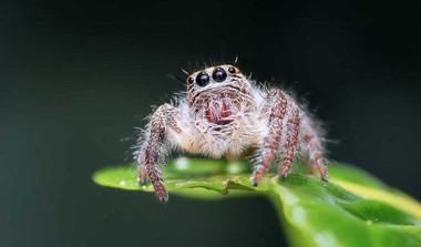 Vaidehi's Poem On 'Arachnophobia'