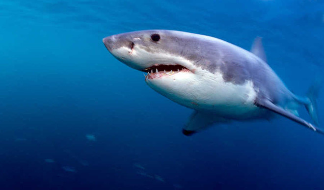 Cancer Cure In Shark DNA