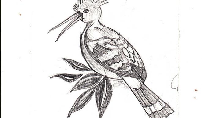 My wild bird