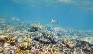 Study Says Underwater Forests Under Threat