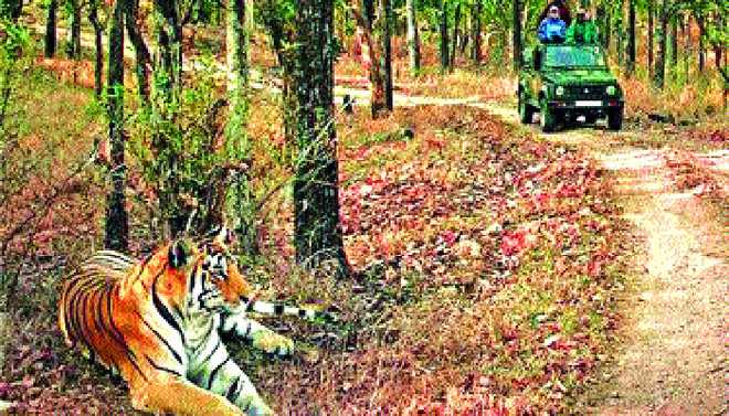 Shubhayu: Incredible Pench Tiger Reserve