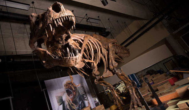World's Biggest T Rex Found In Canada