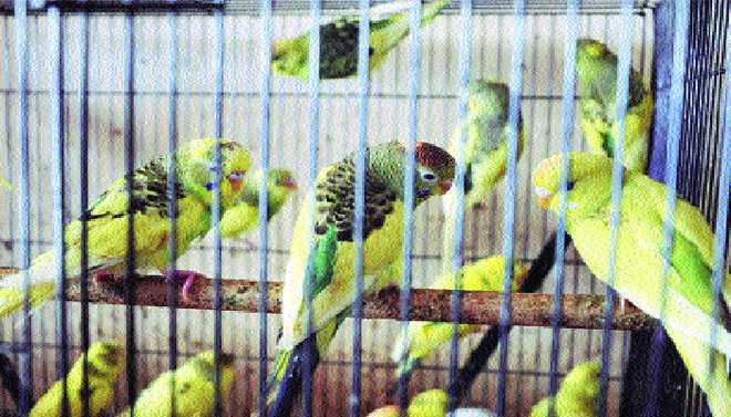 Birds Have The Fundamental Right To 'Live With Dignity' And Fly In The Sky Without Being Kept In Cages Or Subjected To Cruelty, Delhi HC Said