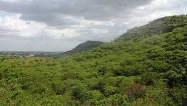 Aditi: Can We Protect Our Forests?